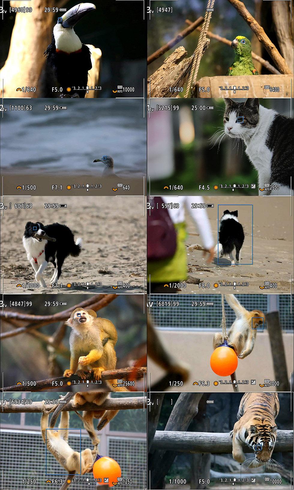 Canon_EOSR6